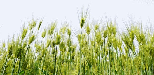 上帝的教会—向花草学习
