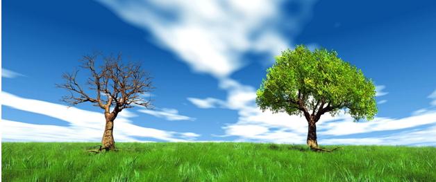枯树,长叶-anshanghong1948