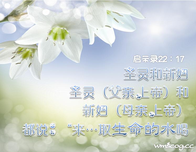 向上天祈求的悔改【安商洪证人会—简称安证会】